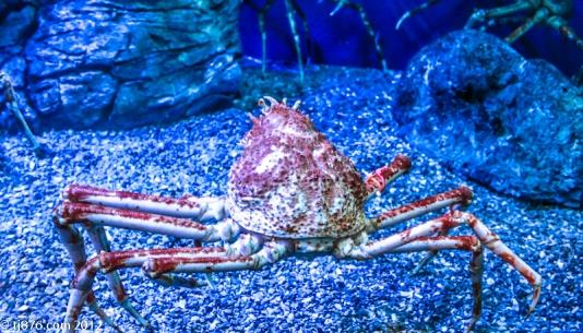 Long Beach Aquarium (10)