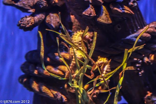 Long Beach Aquarium (2)