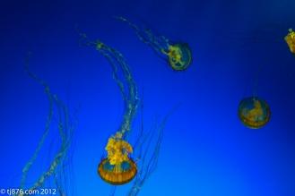 Long Beach Aquarium (4)
