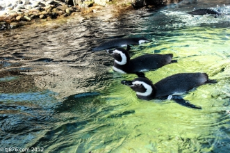 Long Beach Aquarium (7)