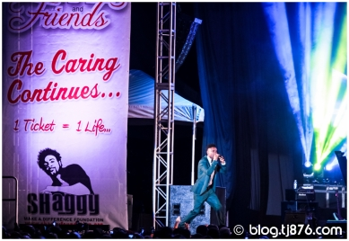 tj876 - Shaggy and Friends 2014 (14)