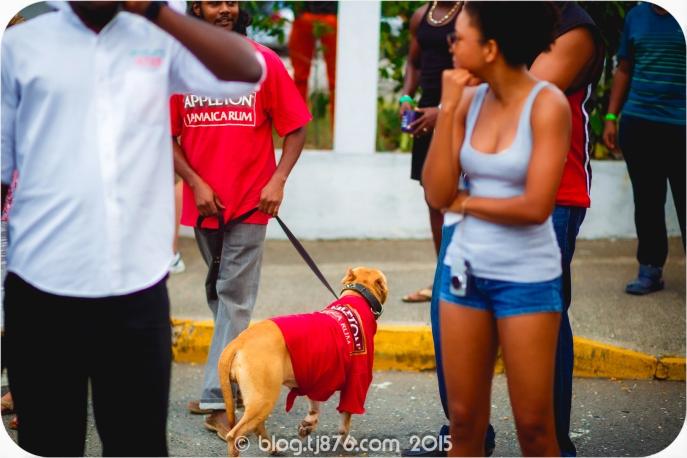 tj876 Jamaica Carnival 2015 (88)